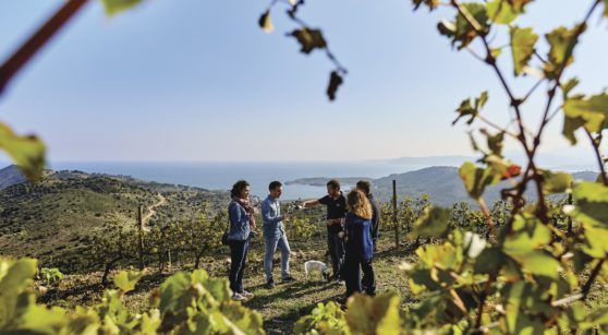 The Wine Routes of Catalonia