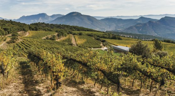The DO Costers del Segre Wine Route