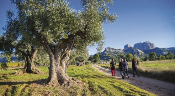 Seven must-do ecotourism activities in Catalonia